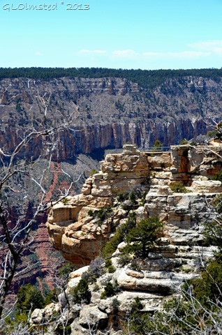 Overlook on North Rim Grand Canyon