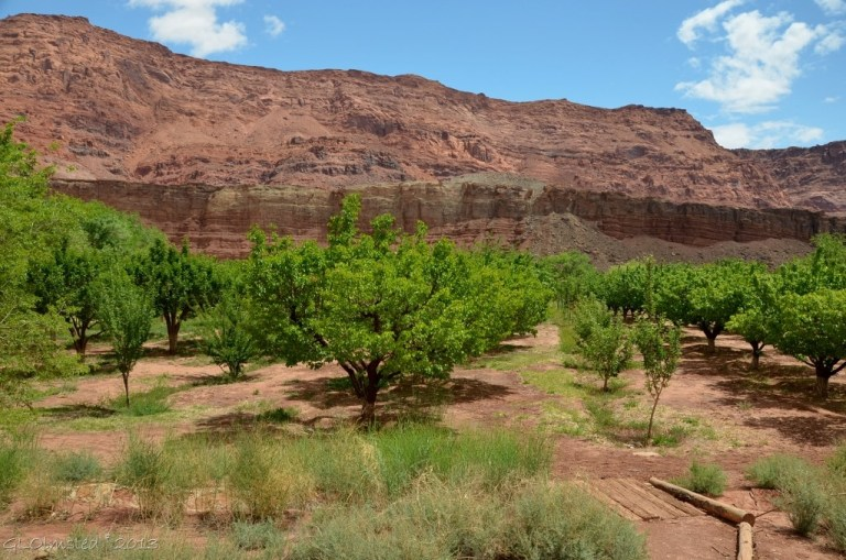 Orchard at Lonely Dell Ranch Lees Ferry Arizona