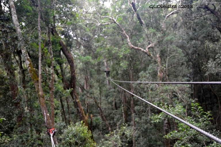 Zip line tsitsikamma canopy tour storms river south africa