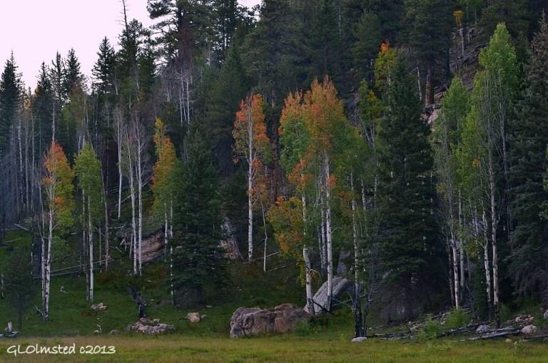 Fall colors Harvey's meadow North Rim Grand Canyon National Park Arizona