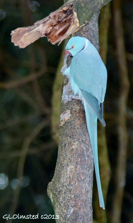 Unidentified bird at Birds of Eden Plattenberg Bay South Africa