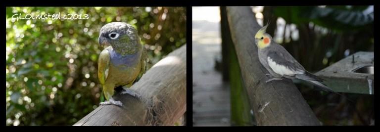 Parrot & Cockatel Birds of Eden Plattenberg South Africa