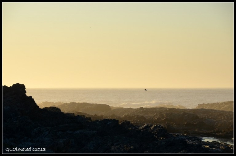 Sunrise over waves with bird at Tsitsikamma National Park Storms River Mouth South Africa