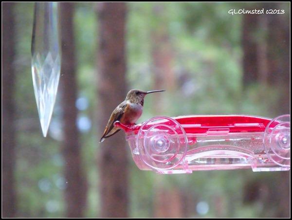 Rufuos hummingbird on feeder thru RV window North Rim Grand Canyon National Park Arizona