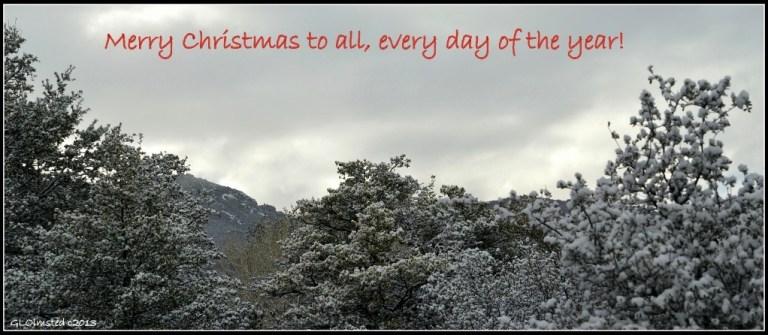 Snow on the Weaver Mts Yarnell Arizona