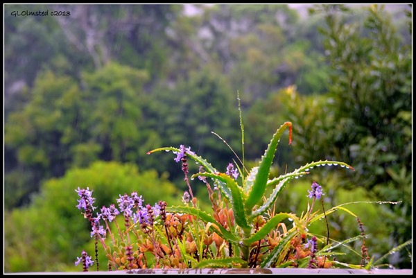 Raindrops on plants Wild Spirit Backpackers Lodge Nature's Valley South Africa