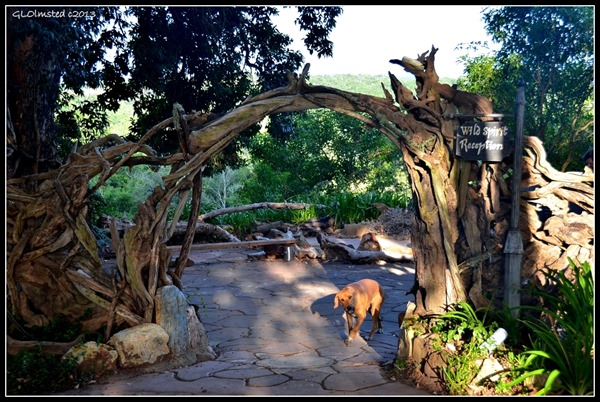 Driftwood entrance at Wild Spirit Backpackers Lodge Nature's Valley South Africa