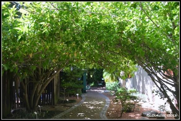 Stellenbosch Botanical Garden South Africa