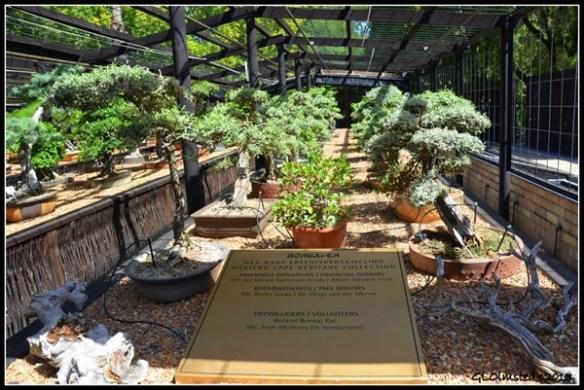 Bonsai House Stellenbosch Botanical Garden South Africa