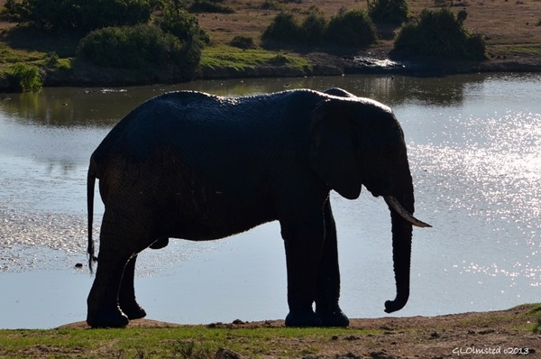 Elephant Addo Elephant National Park South Africa