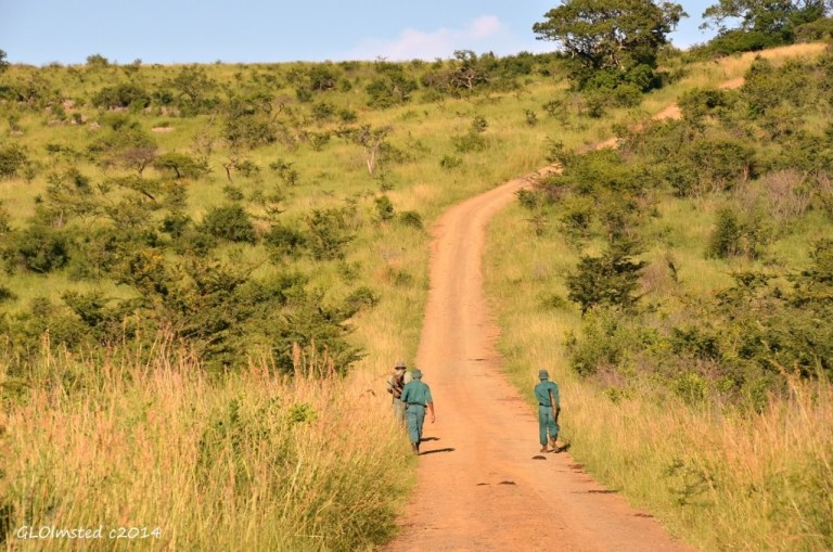 Game Rangers on road Hluhluwe iMfolozi National Park South Africa