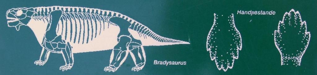 06-DSCF8975-Bradysaurus-diagram-Karoo-NP-SA-1024x244_thumb.jpg