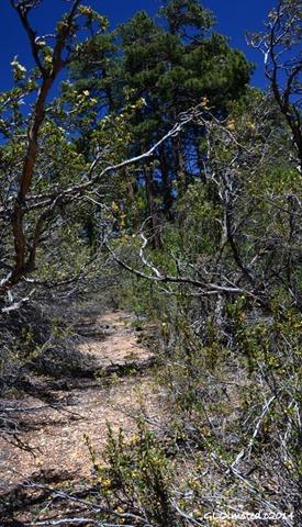 02 DSC_2369 Game trail Walhalla Plateau NR GRCA NP AZ g (586x1024)