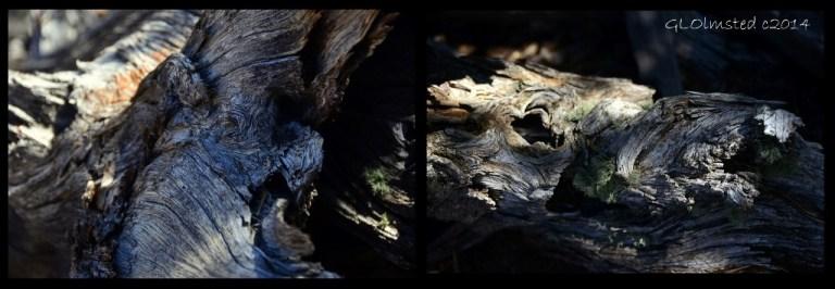 05a Dead tree Walhalla Plateau NR GRCA NP AZ (1024x355)