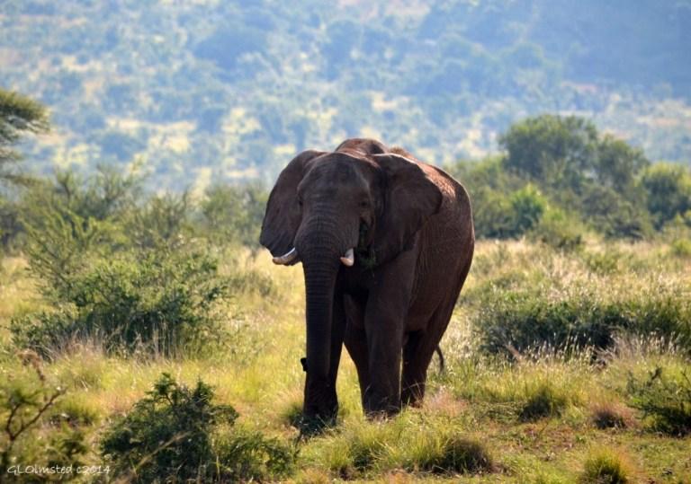 03 DSC_0472 Elephant Pilanesberg GR SA fff68 (1024x718)