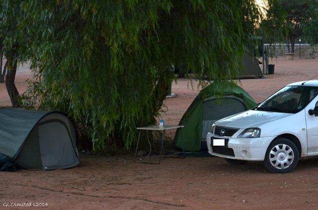 05 DSC_9000 Twee Rivieren camp Kgalagadi TP SA gfb fff68 (1024x678)