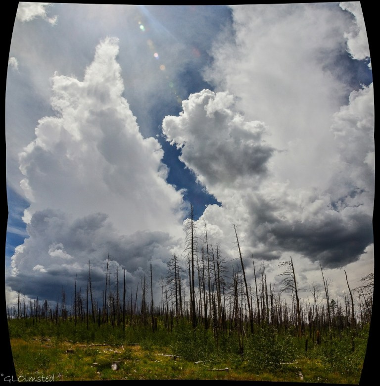 Storm clouds over Warm fire standing dead forest Jct SR67 & FR212 Kaibab National Forest Arizona