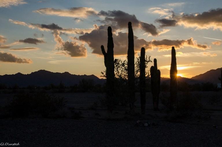 Sunset, Saguaros & Dome Rock Mountains La Paz BLM Quartzsite Arizona