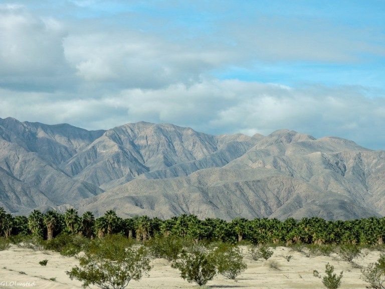 Palm trees & San Ysidro Mts Henderson Canyon Borrego Springs California
