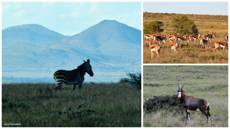 Mountain Zebra National Park South Africa