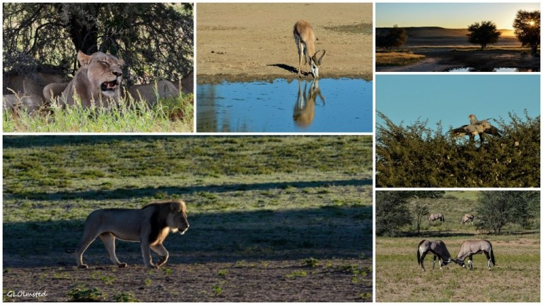 Kgalagadi Transfrontier Park South Africa