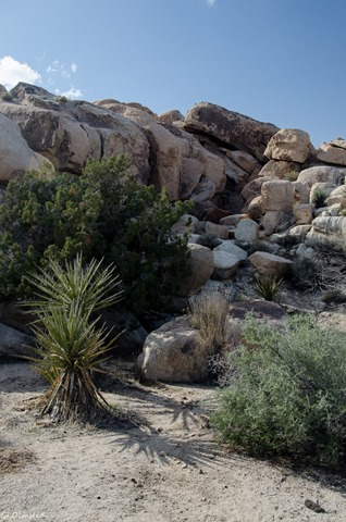 Jumbo Rocks campground Joshua Tree National Park California