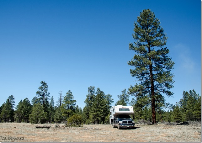Truckcamper Kaibab National Forest Arizona