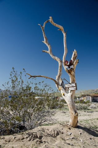 Buzzards Roost sign Joshua Tree California