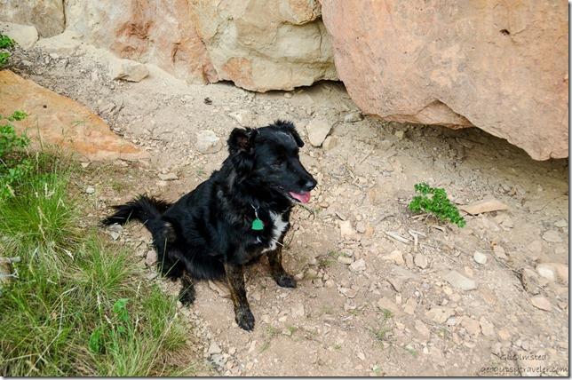 Sasha Kaibab National Forest Arizona