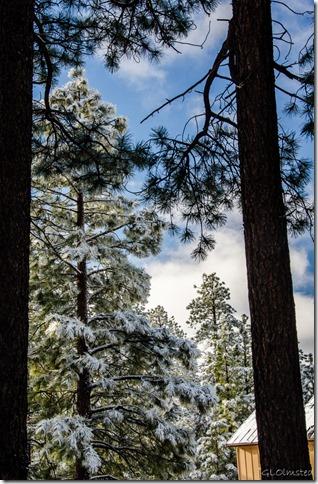 Frosty trees North Rim Grand Canyon National Park Arizona