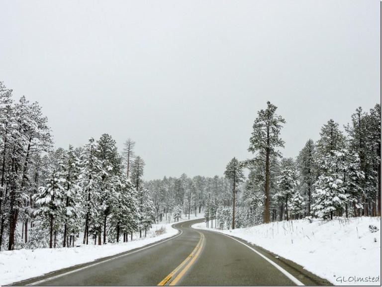 Snow SR67 N Kaibab National Forest Arizona