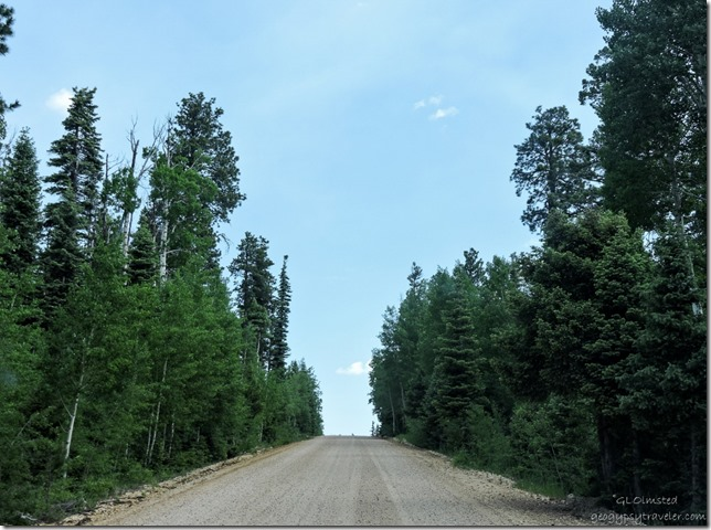Forest Road 611 Kaibab National Forest Arizona