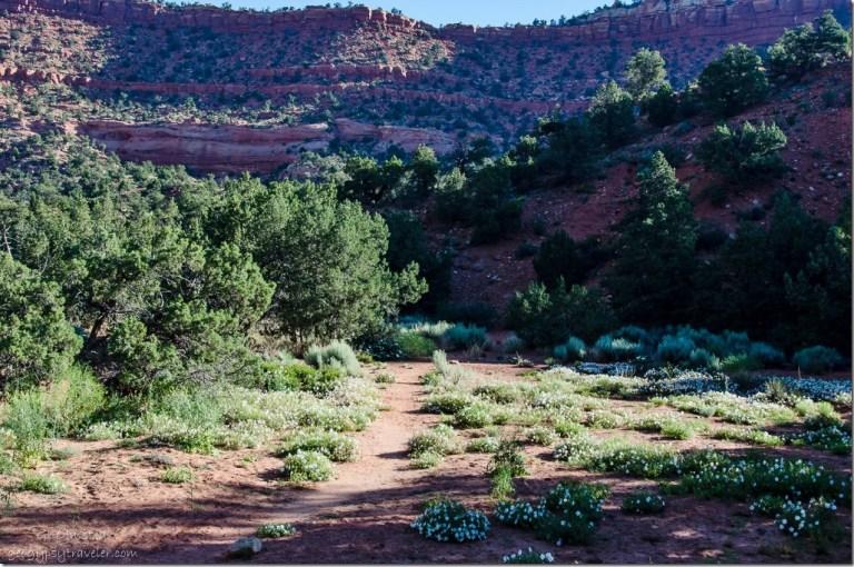 DSC_3262 Bunting Trail Kanab UT