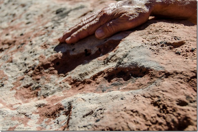 Dinosaur track Bunting Trail Kanab Utah
