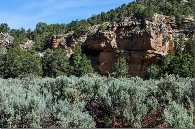 Alcove in cliff face Snake Gulch FR423 Kaibab National Forest Arizona