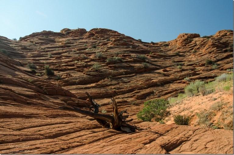 Sandstone Coyote Buttes trail Paria Canyon-Vermilion Cliffs Wilderness Utah