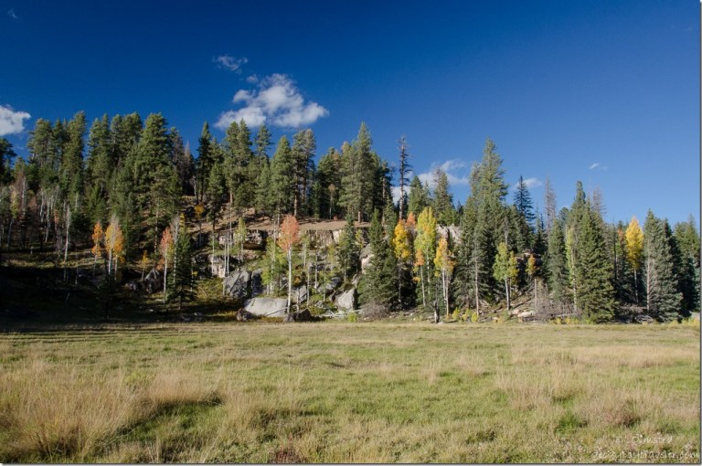 Fall aspen Harvey Meadow North Rim Grand Canyon National Park Arizona