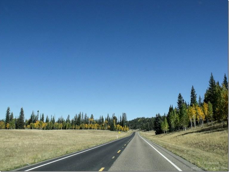 Fall colors along meadows SR67 north Kaibab National Forest Arizona