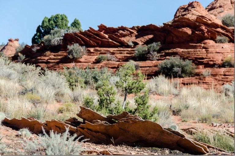 Sandstone fins Upper Buckskin Utah