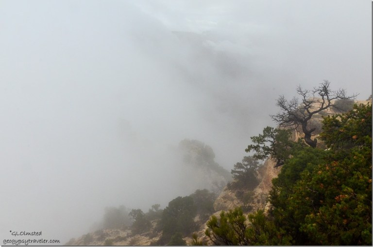 Foggy canyon Cape Royal North Rim Grand Canyon National Park Arizona