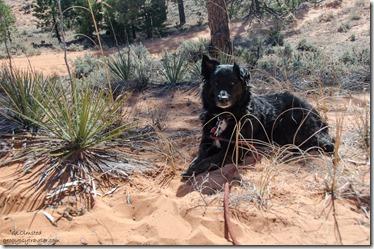 Sahsa sand dune Utah