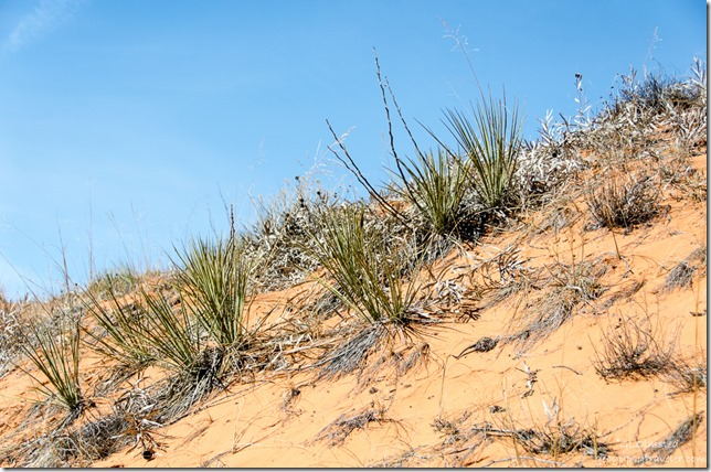 Sand dune Utah