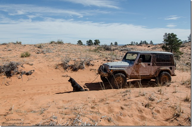 Sahsa hooked to Jeep Sand dune ATV trail to Peekaboo Canyon Utah