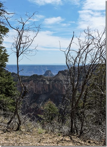 View from Transept Trail North Rim Grand Canyon National Park Arizona