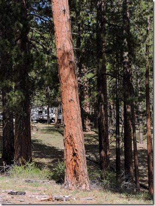 RV thru trees North Rim Grand Canyon National Park Arizona
