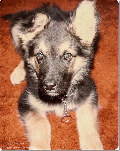 Denali at 2 months Wenatchee Washington