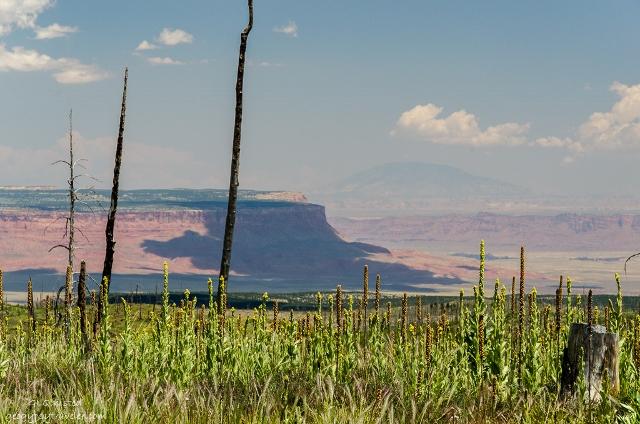 02 DSC_7773lerwss Paria Plateau to Navajo Mt thru 2006 Warm Fire SR67 Kaibab NF AZ fff165 (640x424)