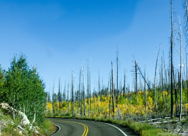 07 1916lerws Fall colors Walhalla Plateau NR GRCA NP AZ fff165-2 (800x580)