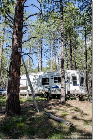 Booster in tree & RV North Rim Grand Canyon National Park Arizona