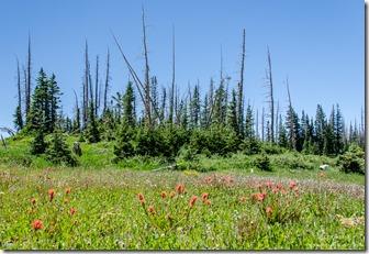 Scarlet Paintbrush & Dandelions Cedar Breaks National Monument Utah